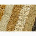 Компания на постоянной основе ЗАКУПАЕТ пшеницу, ячмень, кукурузу и др
