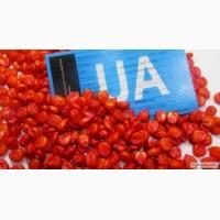 НК «ГРАН» пропонує посівний матеріал Гібриду кукурудзи ГРАН 6 (ФАО 300)