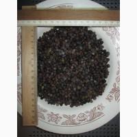 Можжевельник ягоды не кондиция для масла, обыкновенный Juniperus верес
