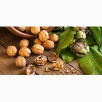 Принимаем заказы на заготовку грецкого ореха 2020 и целого бойного ореха