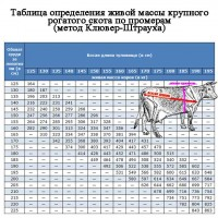 Куплю. корови в Добровеличківському і сусідніх районах бики до 39 корови до 29