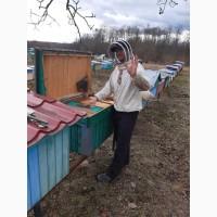 Пчеловодное Фермерское Хозяйство Реализует пчел Карпатка с Доставкой
