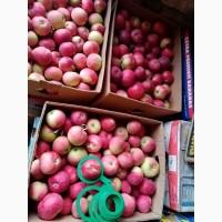 Продам яблоки женева