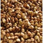 Семена гречихи - сорта Украинка, Крупинка