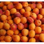 Закупим абрикос