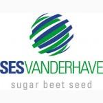 Насіння цукрового буряка СЕСВандерХаве Бельгія
