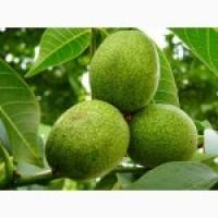 Продам грецкий орех зеленый