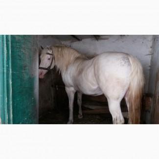Продам коня(кобилу).Ціна договірна