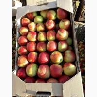 Продам яблоко оптом. Цена снижена. Есть 9 сортов