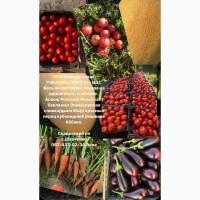 Продам кубовидный перец/баклажан/помидор сливка