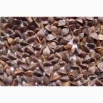 Семена гречихи Девятка (крупнозернисая)