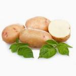 Картофель от ФХ УкрАгро-Дар