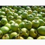 Яблоки Крым от производителя
