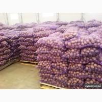 ТОВ Компания УкрТор оптом реализовывает качественный картофель