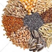 Предприятие производит закупки Зерновых и Масличных культур, по Хорошим Ценам