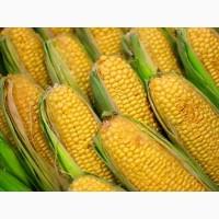 Производим оптовые закупки зерновых культур кукурузы и др. любого качества