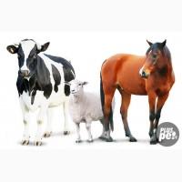 Покупаем баран, овцы, КРС, по всей Украины