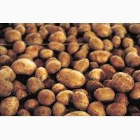 Компания продает картофель оптом