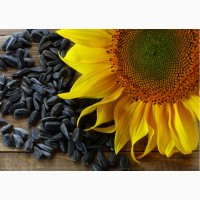 Семена высокого качества