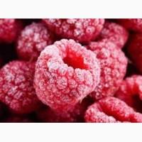 Продаж замороженої малини на експорт