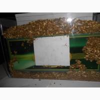 Устройство для наполнения табаком махоркой 200 гильз за 4 минуты
