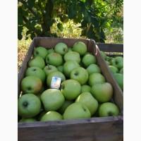 Продам яблоки Мутсу отличного качества