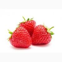 Закупаем ягоду клубнику