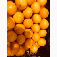 "Продам мандарин ""Mihowase"""