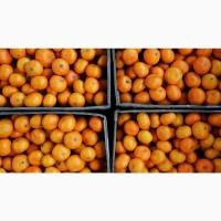 Продам цитрусовые апельсин мандарин лимон грейпфрут гранат