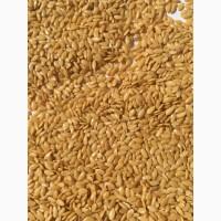 Продам лён золотистый урожая 2021 года- 2 000 тонн