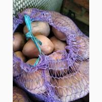 Продам овощи картофель, лук, буряк, морковь