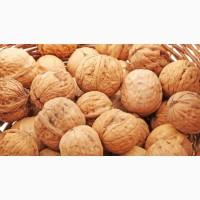 Продам Мытый Кругляк грецкого Ореха2020 урожайного года