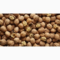Куплю орехи кругляк или зерно дорого