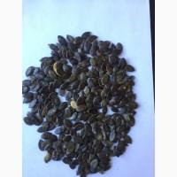 Продам тыквенную семечку (голосемянка, штырийская)