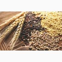 Постійно закуповуємо зерновідходи олійні, зернові, бобові