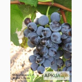 Виноград изабельных сортов на вино и соки