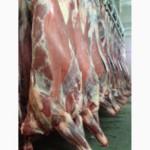 Half beef Young Bull (HALAL)- Молодняк говядины в полутушах (Халяль)