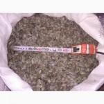 Продам семена голосемянной тыквы
