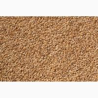 Продам пшеницю фуражну з ПДВ