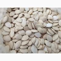 Купуємо гарбузове насіння оптом по всій Україні сорт Сіроволжська