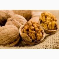 Покупаю грецкий орех, фасоль, семечку тыквенную