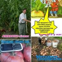 Семена амаранта, амарант кормовой гигант