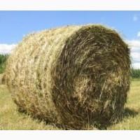 Продам солому пшеницы