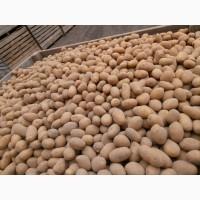 Продам насіневу картоплю.Сітка 15 кг. Сорти ГАЛА.ТАЙФУН.КОРОЛЕВА АННА