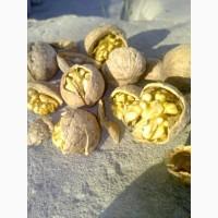 Продам орех, кругляк, бойный - 3-4т