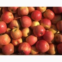 Продам яблука: Фуджі, айдаред