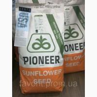 Семена подсолнечника «Пионер» П62ЛЕ122, ( круизер)