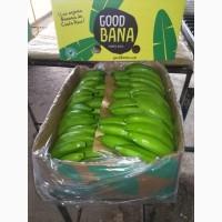 Предлагаем бананы из Эквадора и Коста Рика