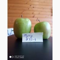 Продам якісні яблука з холодильника