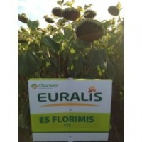 Продам гибрид подсолнечника ЕС ФЛОРИМИС ( Евралис)